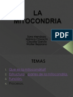 Expo La Mitocondria