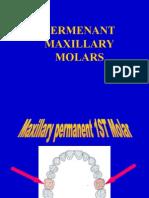 Maxillary I Molars