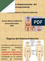 Envejecimiento y Sistema Endocrino