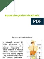 7 Apparato gastroenterico