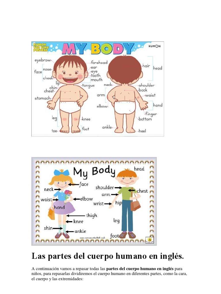 Las partes del cuerpo humano en inglés