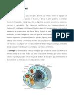 BRUNO TRABAJO FINAL.pdf