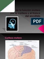 Control de la función motora por la corteza y Equilibrio