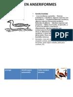 Taxonomia Familias Aves Ajustado Marinilla 2