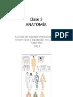 Clase 3 Anatomia