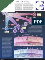 CD4+ T უჯრედების მრავალფეროვნება