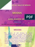 Meiosis s