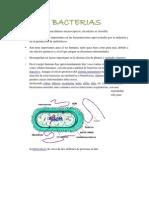 Bacterias Patogenass