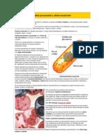 Célula procarionte y célula eucarionte