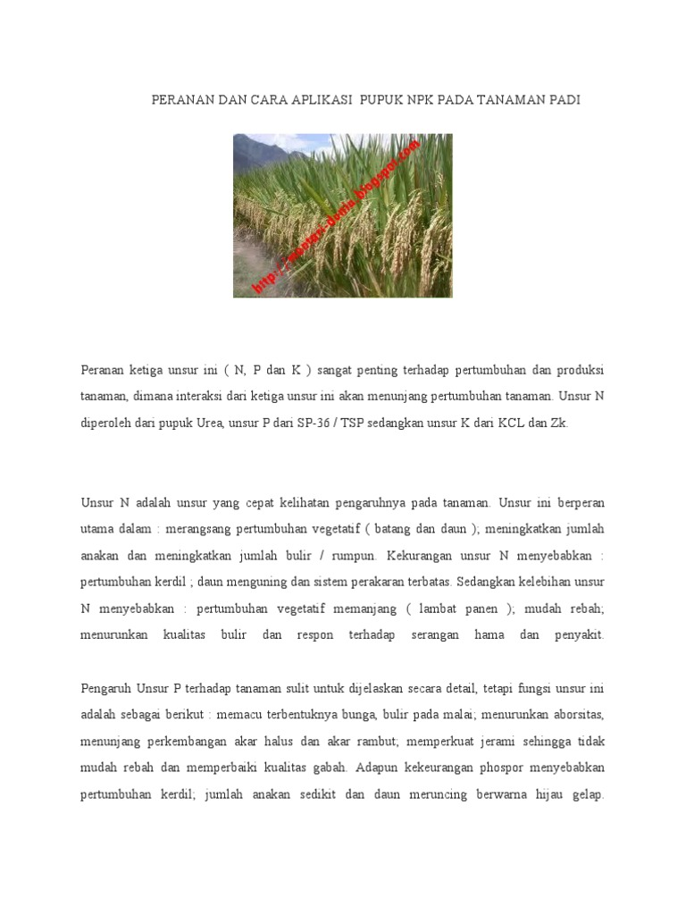 Fungsi pupuk sp 36 untuk tanaman padi