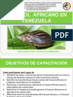 Caracol Africano en Venezuela