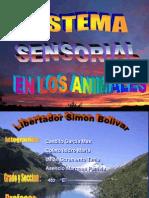 Sistema_sensorial COLETO