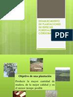 Establecimiento de Plantaciones de Especies Forestales