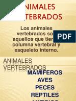 vertebrados-1201113014185011-3