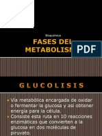 fasesdelmetabolismo-100309170106-phpapp02