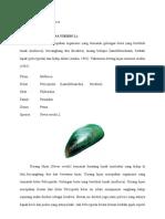 Laporan Avertebrata - Mollusca (Kerang Hijau)