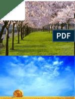 Presentation Seasons