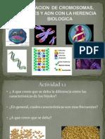 Genes Herencia.