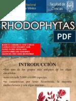 seminario rhodophytas (1)