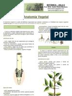Apostila de Botânica- aula 5, anatomia vegetal para PV