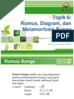 Prak 3 mortum rumus diagram dan metamorfosis bunga ccuart Image collections