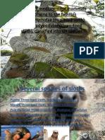 Sloth Extinction