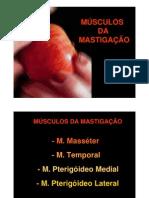mod3_musculos_mastigacao