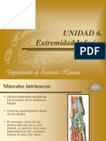 musculos mienbroinferior.ppt