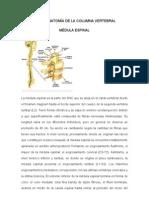 136917541 Neuroanatomia de La Columna Vertebral (1)