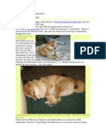 Are Shiba Inus Truly Independent