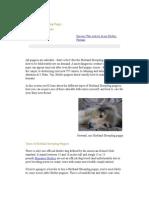 The Shetland Sheepdog Puppy