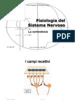 somestesia.pdf