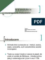 Organizare Si Evolutie in Increngatura Molustelor