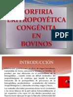 Porfiria Congenita en Bovino