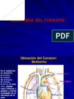 Anatomia Del Corazon II