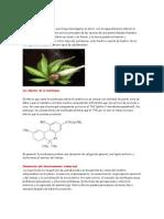 Marihuana y Cocaina. Investigacion xD