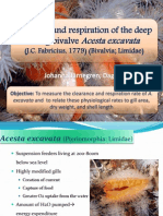 Filtration and Respiration of the Deep Living Bivalve
