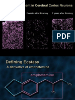 Neurobio of Ecstasy