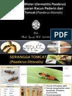 Mekanisme Dermatitis Paederus Akibat Racun Pederin Serangga Tomcat