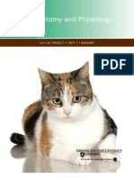 Cat's Anatomy
