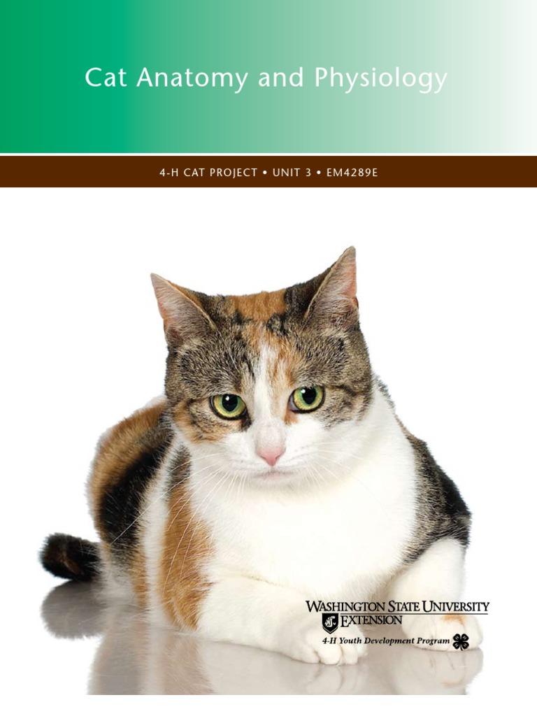 Cat\'s Anatomy | Felidae | Blood