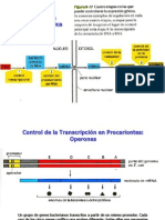 Control Transcripcion.ppt