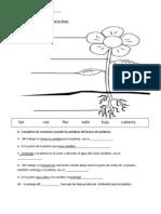 Plants Quiz Spanish