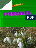 0anotimpurile_primavara_colaj (2)