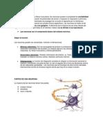 LA NEURONA -Neurofisiologia