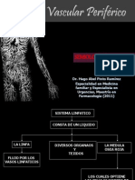 Sistema Vascular Periferico Completo