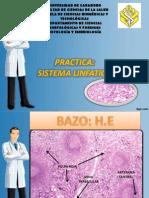 Practica Sistema Linfatico