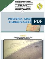 Practica Sistema Cardiovascular Nuevo 2011
