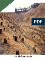 Deforestacion CMC