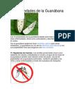 12 Propiedades de la Guanábana